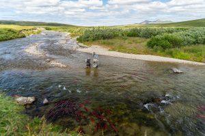 Kulik Lodge Trout Fishing